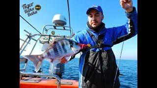 Download Shimano Tiger Baku Baku | Tai Rubber Video
