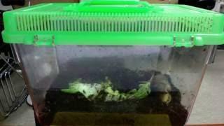 Download 식용 달팽이 하루 (2016.11.10) Video