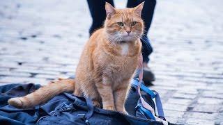 Download A Street Cat Named Bob - Official Trailer - At Cinemas November 4 Video
