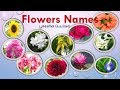Download Flowers names in Tamil & English with images | பூக்களின் பெயர்கள் | Learn flowers name for kids Video