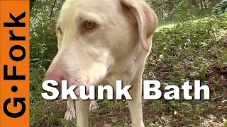 Download Remove Skunk Smell On Your Dog - GardenFork Video