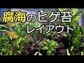Download 腐海のヒゲ苔レイアウト ヒゲ苔を育てる!【アクアリウム】 Video