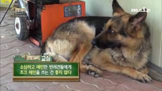 Download 세상에 나쁜 개는 없다 - 군견 샤넬의 민생 적응기 Video