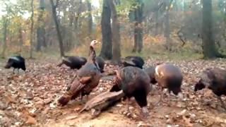 Download Deer Trail Turkey 10 13 16 Video