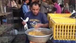Download İlginç Yavru Güvercin Bakma Tekniği Video