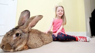 Download THE BIGGEST RABBIT In The World | You have to see this huge ball of tenderness Video