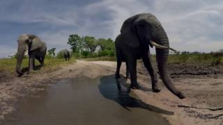 Download 360 Video African Safari Experience Video