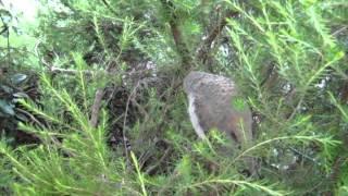 Download where do birds go when they sleep (1) Video