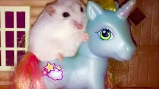 Download My Little Hammy: The cutest hamster video you'll ever see! 🐹🦄 Video