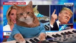 Download Keyboard Cat CNN Video