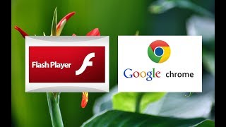 Download New Fix For Disabled & Blocked Adobe Flash Player For Google Chrome New Version Users Video