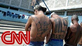 Download MS-13 gang members: Trump makes us stronger Video