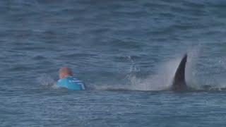 Download Jaw-dropping: Surfer fights off shark attack live on TV in S. African competition Video