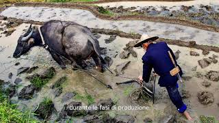 Download Cibo e cultura: il nostro patrimonio Video