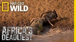 Download Croc Sneak Attack   Africa's Deadliest Video