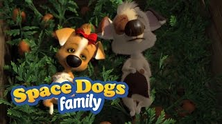 Download SPACE DOGS FAMILY - Puppy Love Video