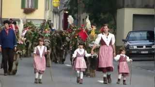 Download Alpabfahrt Muotatal.mp4 Video