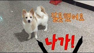 Download 강아지를 집에서 내쫓아 보았더니 강아지의 반응 Video