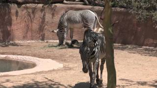 Download Los Angeles Zoo Tour, 2011 Video