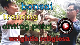 Download Training bonsai anting putri (wrightia religiosa ) Video