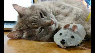Download All she needed was a mouse buddy Video