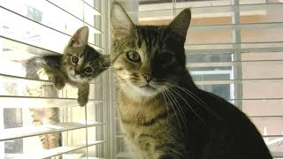 Download Cute is Not Enough - Cute Cats and Kittens Doing Funny Things 2018 #10 Video
