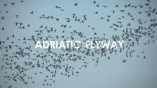 Download Adriatic Flyway - The Central European Route for Migratory Birds Video