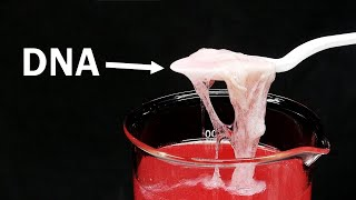 Download What is DNA and what does it taste like?   Edible Chem Video