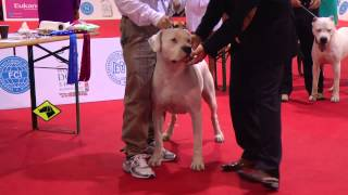 Download ″Perros en acción″ Mundial FCI 2013 Video