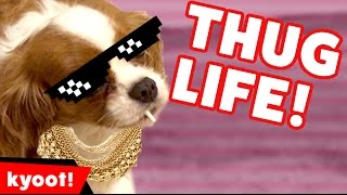 Download The Funniest Animal Thug Life Bloopers of 2016 Caught On Tape | Kyoot Animals Video