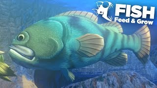 Download GOLIATH GROUPER!!! - Feed And Grow | Ep9 Video
