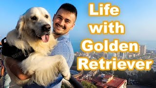 Download Daily Life With a Golden Retriever Video