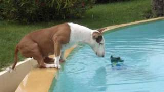 Download chien drole Video
