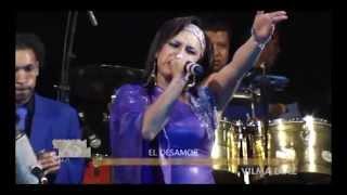 Download EL DESAMOR - HOMENAJE A LA SONORA DINAMITA - VILMA DIAZ Video