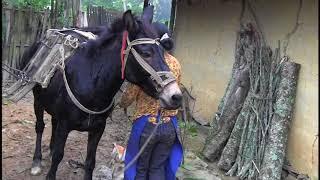 Download Hmoob Suav lub Neej part 5 Nees thauj ntoo Video