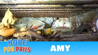Download Hope For Paws: Amy - an injured Chihuahua hiding from rescuers. Find out how YOU can help her today! Video