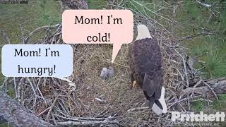 Download SWFL EAGLE CAM 12.28.17 Bobbing, Weaving, Wings and Squirrel Video