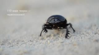 Download Національний природний парк ″Джарилгацький″: острів Джарилгач Video