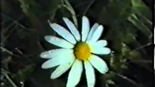 Download Биология размножения и развития пчёл Video