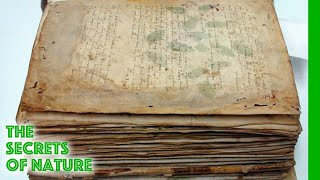 Download Voynich Code - The Worlds Most Mysterious Manuscript - The Secrets of Nature Video