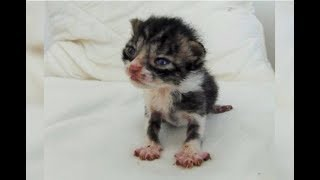 Download Tiniest Orphaned Kitten Kept Crying For Help In A Field Several Weeks Later… Video