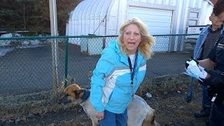 Download UPDATE: Security cameras capture family dog stolen from Riverside home Video
