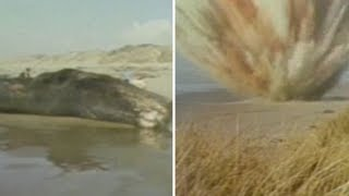 Download FROM THE ARCHIVES: The exploding whale of Florence, Oregon Video