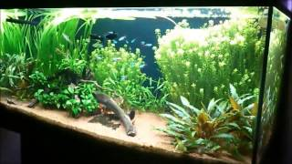 Download Freshwater Planted Aquarium - 327th day Video