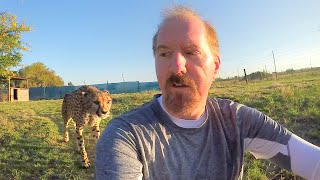 Download Turning Your Back To Leopards & Cheetahs | BIG CATS Show Their Predatory Nature Part 2 Video