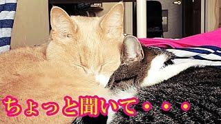 Download お母ちゃんの至福の時💕猫との語らい Video