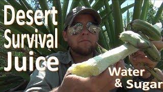 Download Survival Desert Sugar Water -Yucca Juice- Video
