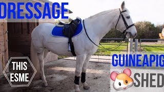 Download Vlog   Dressage and Guineapig shed building   This Esme Video