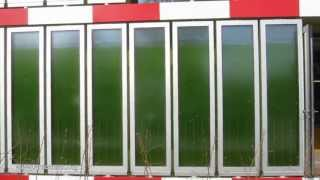 Download How Algae feed a House Video