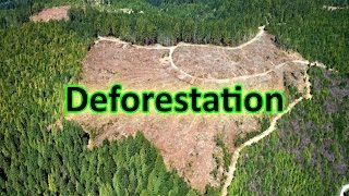 Download Help Us Stop Deforestation Video